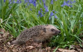 Picture flowers, bells, hedgehog
