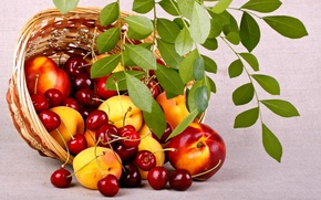 Picture branch, nature, basket, peaches, leaves, berries, fruit, food, summer, cherry, basket