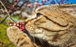 Wallpaper mustache, branch, paw, flower, cat