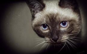 Picture eyes, cat, light, Blik
