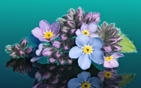 Wallpaper macro, forget-me-nots, reflection, buds, background