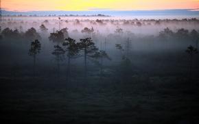 Picture forest, landscape, fog, morning