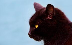 Wallpaper cat, cat, background, portrait, muzzle, profile, black cat