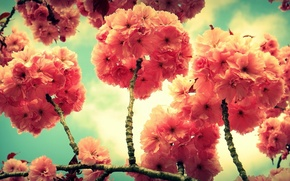 Picture flowers, tree, branch, spring
