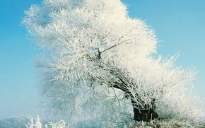 Wallpaper tree, blue, snow