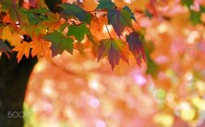 Wallpaper autumn, nature, foliage, bokeh, branch, macro, tree