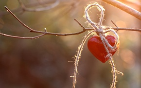 Picture red, heart, branch, rope