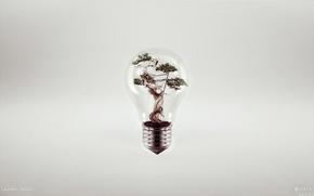Picture creative, tree, lamp