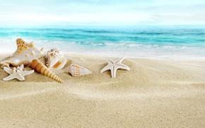 Picture sand, sea, beach, shell, beach, sand, seashells