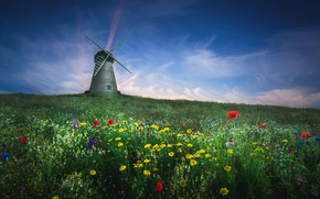 Picture field, summer, flowers, mill