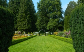 Picture greens, trees, Park, lawn, green, Summer, summer, trees, nature, park