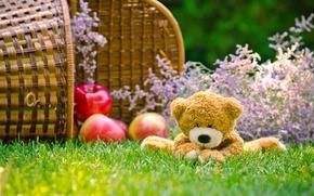Wallpaper bear, basket, toy, apples, grass