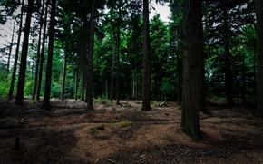 Picture forest, trees, Belgium, Bokrijk, Bokrijk