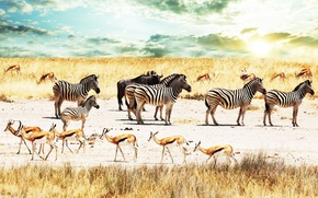 Wallpaper the sky, Africa, antelope, Zebra, Savana, Buffalo