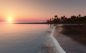 Picture sunset, tropics, palm trees, the ocean, coast