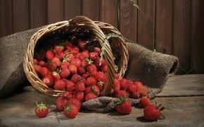 Wallpaper berries, tree, basket, rospi, basket, strawberry
