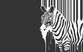 Wallpaper strips, b/W, Zebra, beast, flows, animal, zebra