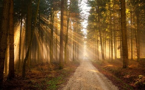 Picture road, forest, light, silhouette