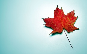 Picture red, blue background, maple, autumn leaf