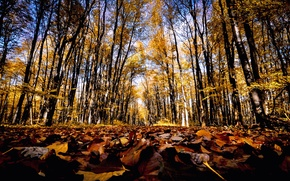 Picture road, autumn, forest, leaves, the sun, trees, track