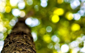 Picture leaves, macro, trees, background, tree, widescreen, Wallpaper, foliage, blur, trunk, wallpaper, leaves, bark, widescreen, background, …