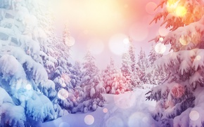 Wallpaper snow, snow, winter, snowflakes, tree, nature, forest, winter