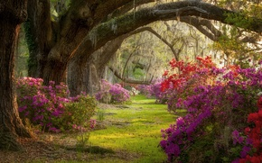 Picture trees, Park, South Carolina, flowering