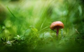 Picture greens, grass, mushroom
