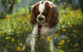 Picture dog, flowers, bokeh