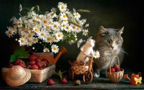 Picture cat, flowers, berries, toy, chamomile, mouse, strawberry