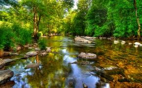 Picture Exmoor, lake, Exmoor, reflection, trees, river, stones