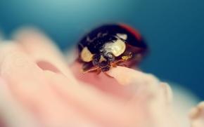 Picture insects, LADYBUG, LADYBUG