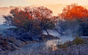 Picture nature, fog, river, morning