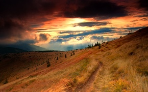 Picture grass, clouds, rays, clouds, slope, tree