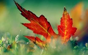 Wallpaper grass, macro, leaf