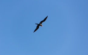 Picture the sky, minimalism, Bird