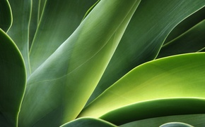 Picture greens, leaves, stems, plant, curves