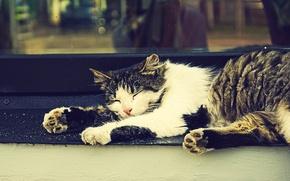 Wallpaper cat, sleep, window