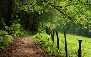 Picture Forest, Summer, Trail, Nature, Summer, Green Day, Forest, Path, Green forest
