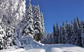 Picture winter, road, snow, trees, landscape
