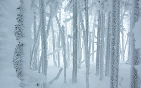 Picture winter, frost, forest, snow, trees, frost, Winter, Snow, frost, Forests
