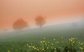 Picture trees, flowers, fog, spring