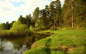 Picture forest, landscape, nature, river, stay, Wallpaper, walk, Cava