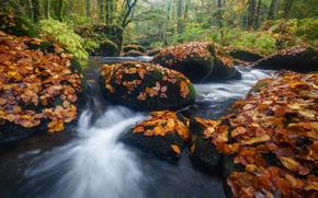 Picture autumn, forest, leaves, river, stones, France, France, Brittany, Brittany, River Aer, Prislac, Priziac