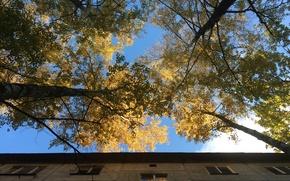 Picture The sky, Reflection, The city, Autumn, Windows, Golden autumn, Birch