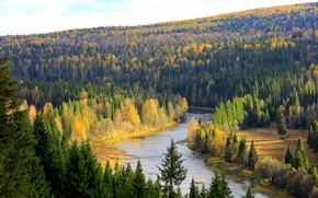 Picture forest, trees, river, Russia, Perm Krai, The Koiva