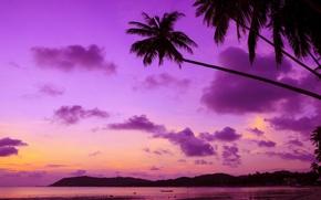 Picture sea, beach, sunset, tropics, palm trees, shore, beach, sea, ocean, sunset, purple, paradise, palms, tropical
