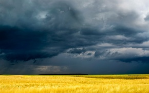 Picture field, grass, clouds, yellow, gloomy