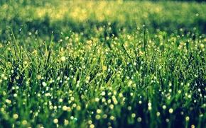 Picture greens, grass, the sun, macro, background, widescreen, Wallpaper, vegetation, wallpaper, widescreen, background, bokeh, full screen, …