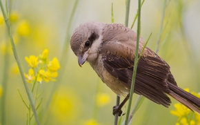Picture summer, nature, bird